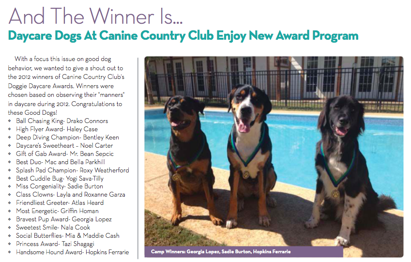 Daycare Dogs New Award Program